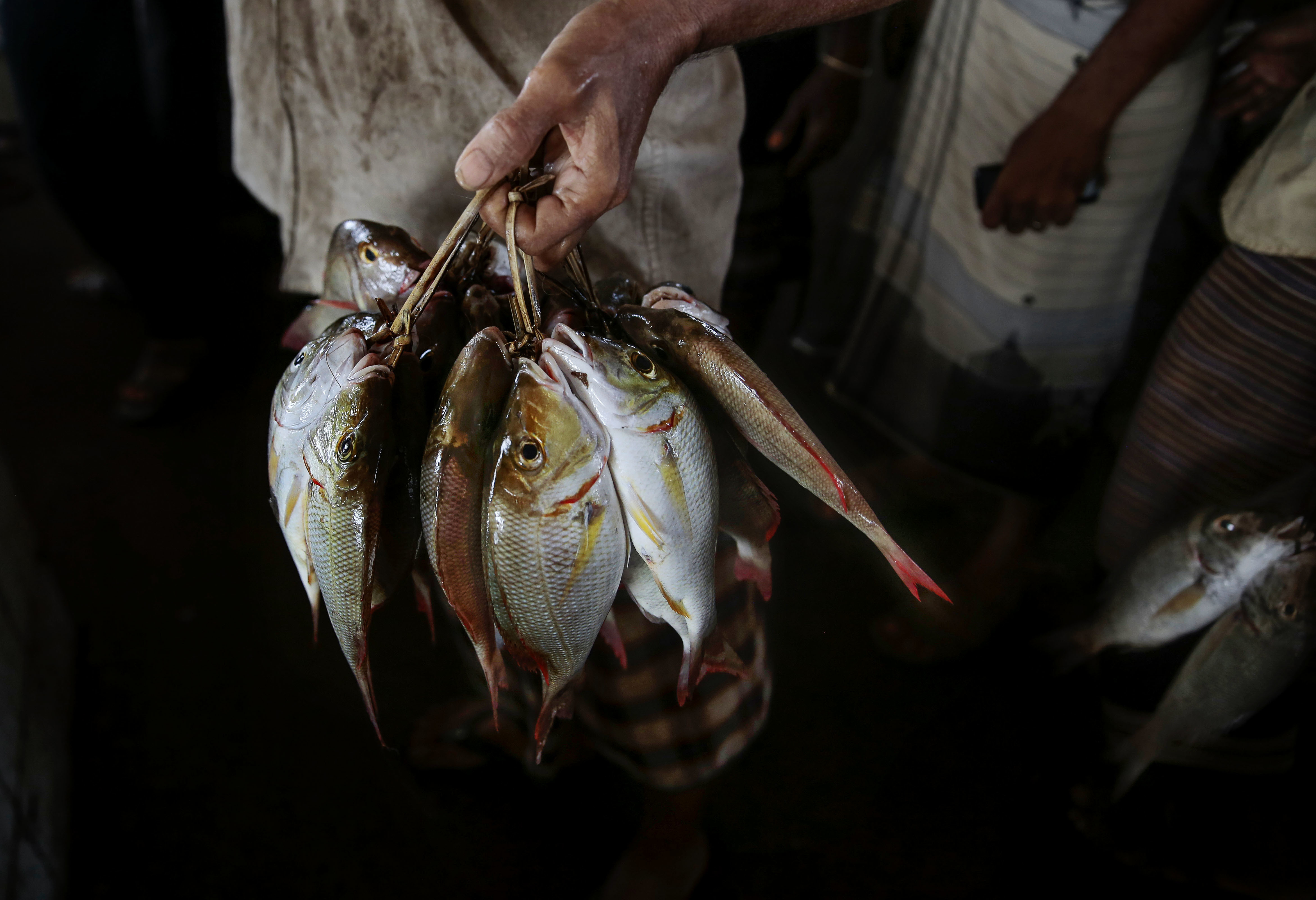 漁民以往捕魚會花上15天時間,但沙特聯軍空襲漁船,生命受到威脅,現捕魚只會用上數天。捕魚成本大增,格價上升,也門平民開始不能負擔買魚。圖為一名漁民展示漁獲。