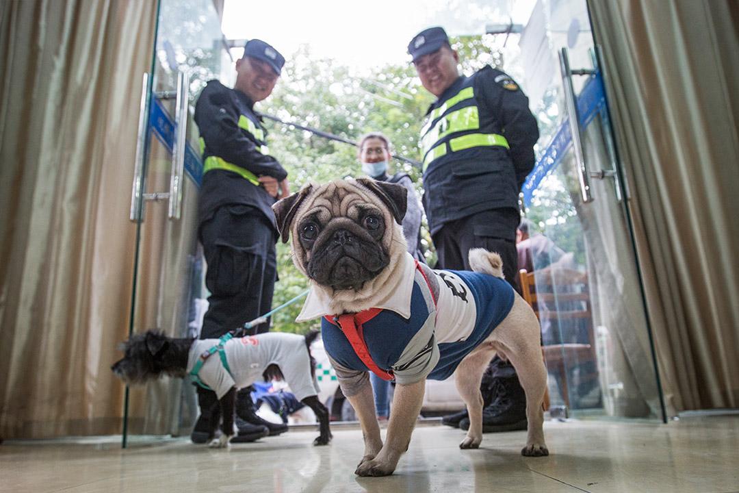 從11月15日至12月底之前,杭州啟動全市範圍內的「文明養犬」集中整治行動,根據規定,杭州市區內的遛狗時間為每天晚上7點至第二天早上7點。 圖:Imagine China