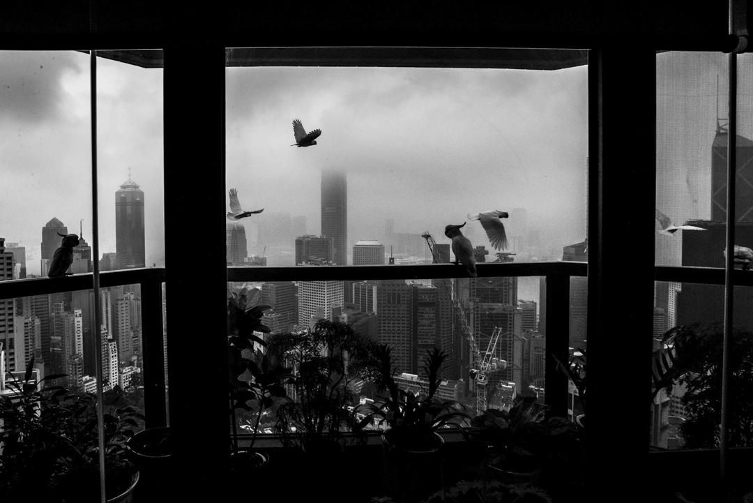 Xyza媽媽工作將近廿年的地方。陽台外,野鳥飛過,偶作停留。