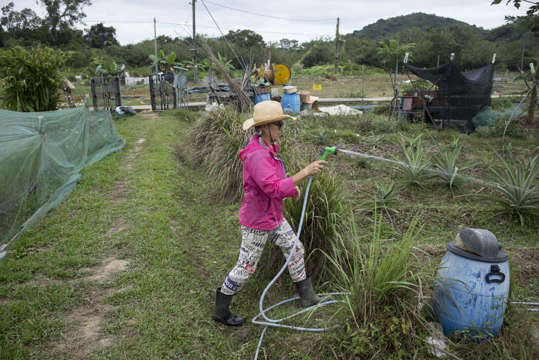 彭日進來香港四十年了,始終覺得自己在香港只是一個過客,只有週末拿起鋤頭去粉嶺種田時,她才能得到片刻喘息。