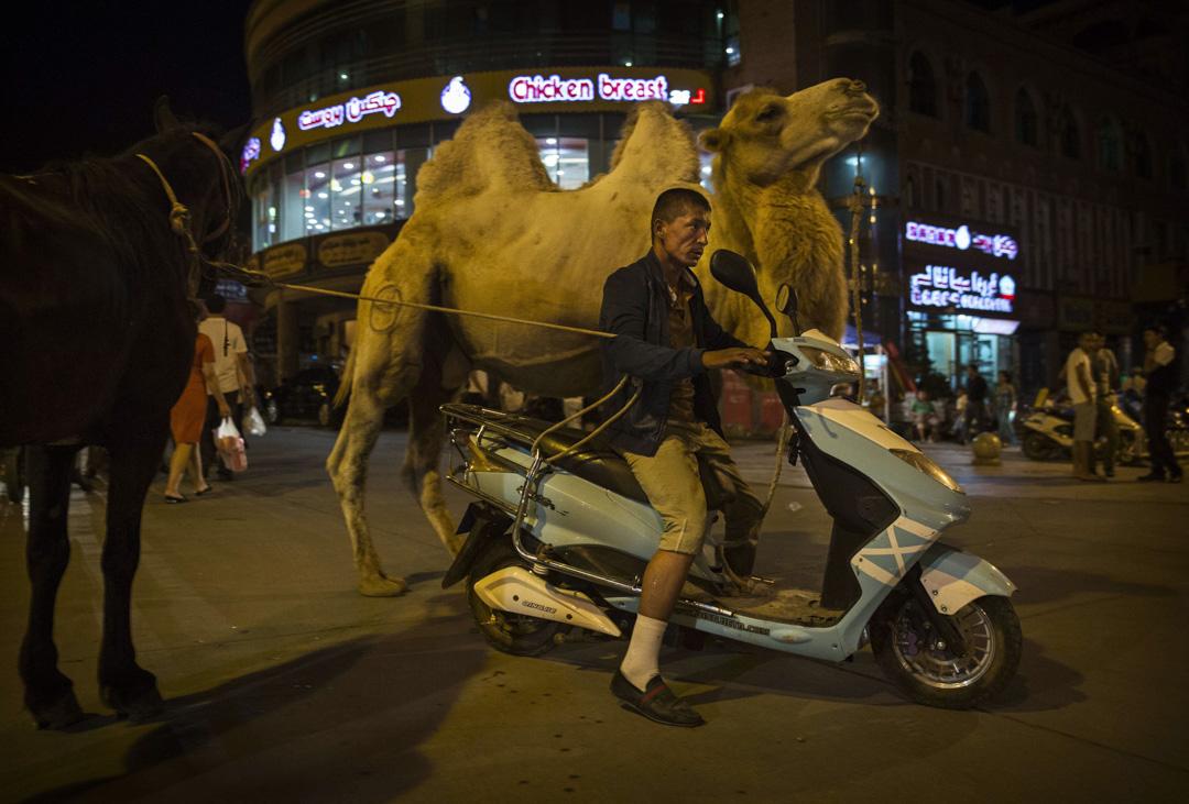 新疆維吾爾自治區喀什市,一名維吾爾族男子騎著摩托車,同時用繩控制著駱駝和馬。 攝:Kevin Frayer/Getty Images