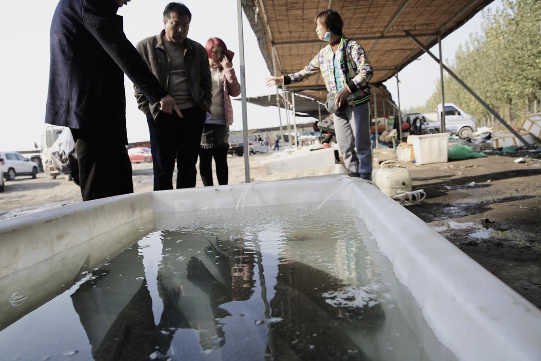 去往安新縣的路邊有一個臨時魚市場,白洋淀漁民正在兜售自家的魚蟹。