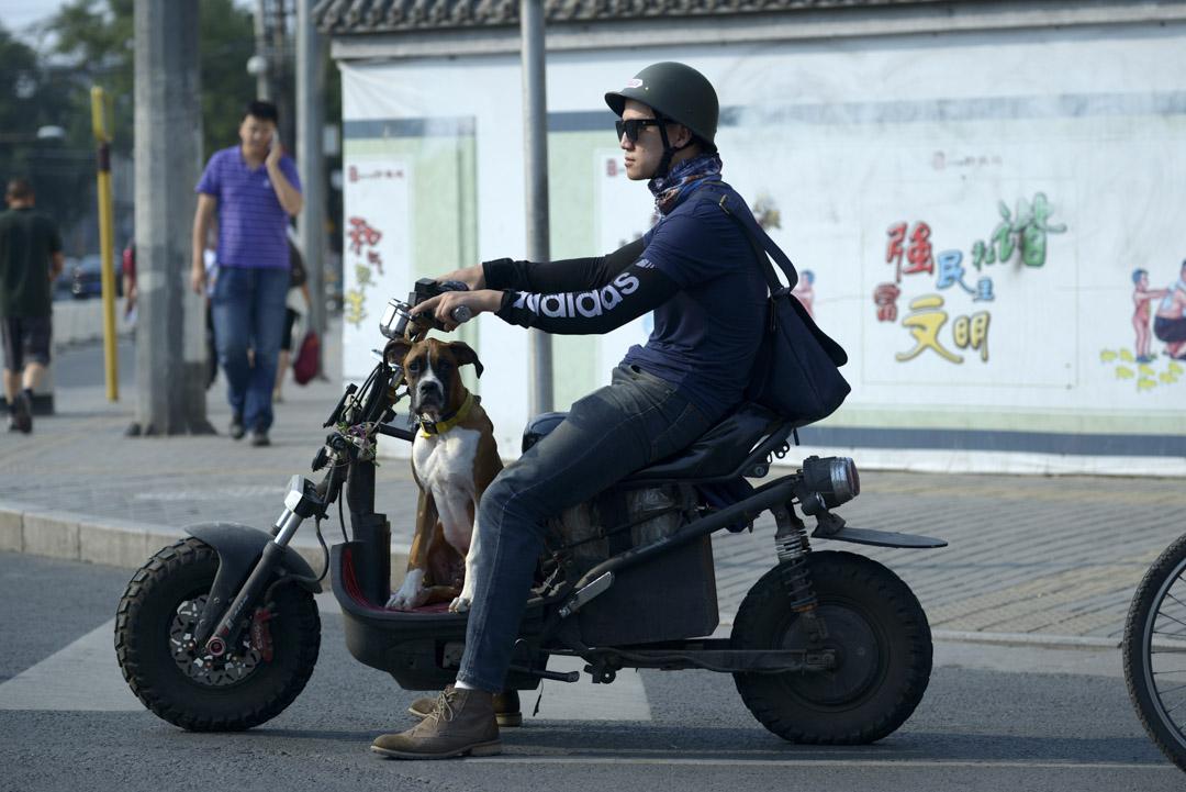 中國各個城市所制定的養犬管理規範,均體現了限制養犬的立法精神,把動物看成重要的治安問題。為了達到限制養犬的目的,絕大多數城市採取高收費高門檻設定養犬條件的手段,以價格槓桿限制市民養犬的動機。