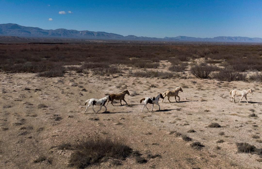 美國德州,馬匹在埃斯佩蘭薩市,離邊境圍欄不遠的一個馬場奔跑。