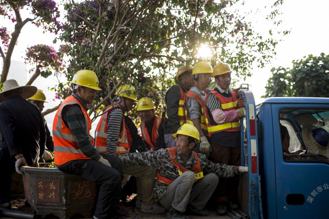 深圳蓮花山公園,一群工人搬運樹木後乘車離開。