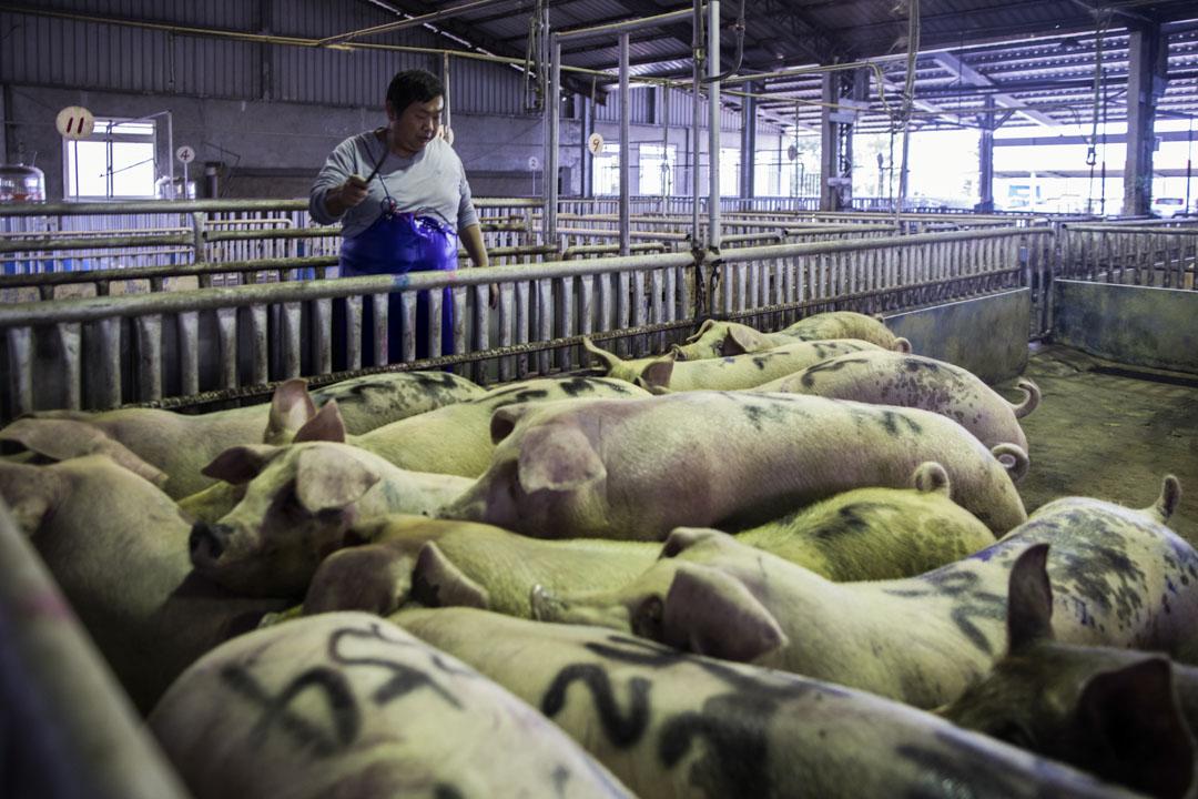 金門縣肉品市場。