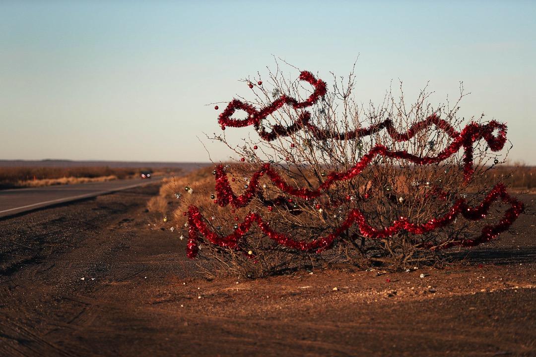 美國德州,美墨邊境附近的一段9號德州州道上,路邊的一棵樹掛著聖誕裝飾。