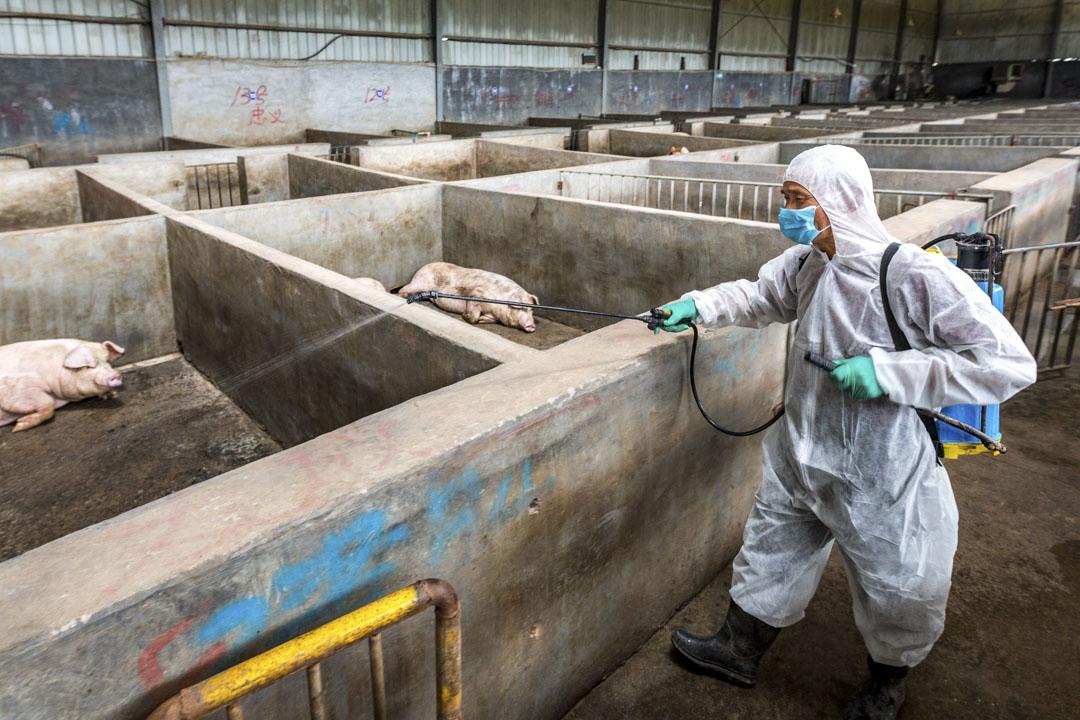 2018年8月22日,浙江一個養豬場,工作人員正進行消毒工作。