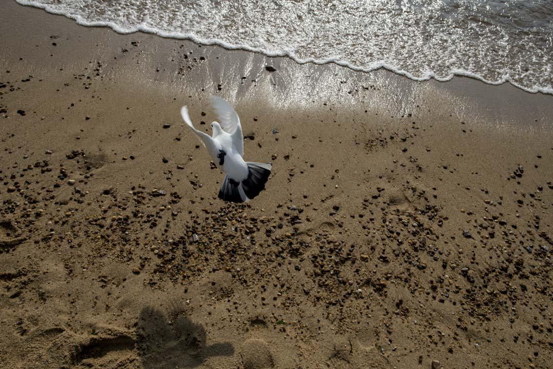 大年初三,淺水灣沙灘上的一隻鳥。