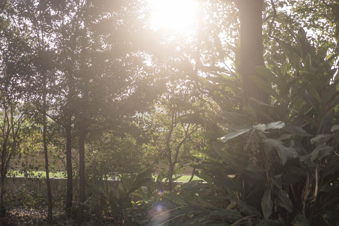 吳音寧彰化家後的庭園。