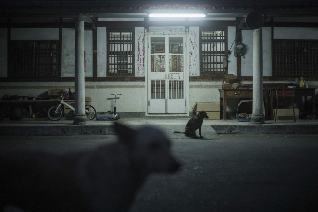 吳音寧於彰化的老家與家犬。