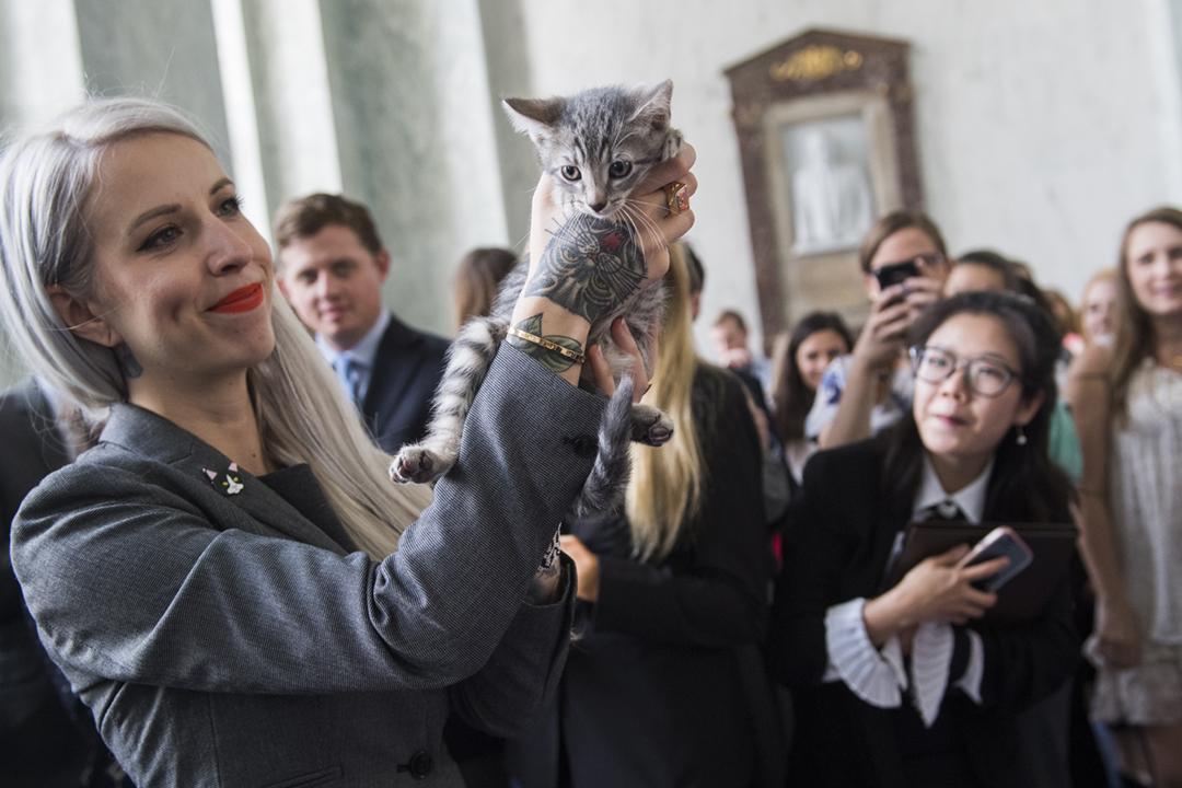 2018年6月7日,共和、民主兩黨議員宣布提出跨黨派議案,要求農業部停止以貓隻進行寄生蟲實驗,外號「貓咪女士」(Kitten Lady)的動物維權人士 Hannah Shaw 手抱一隻幼貓出席。 攝:Tom Williams / CQ Roll Call / Getty Images