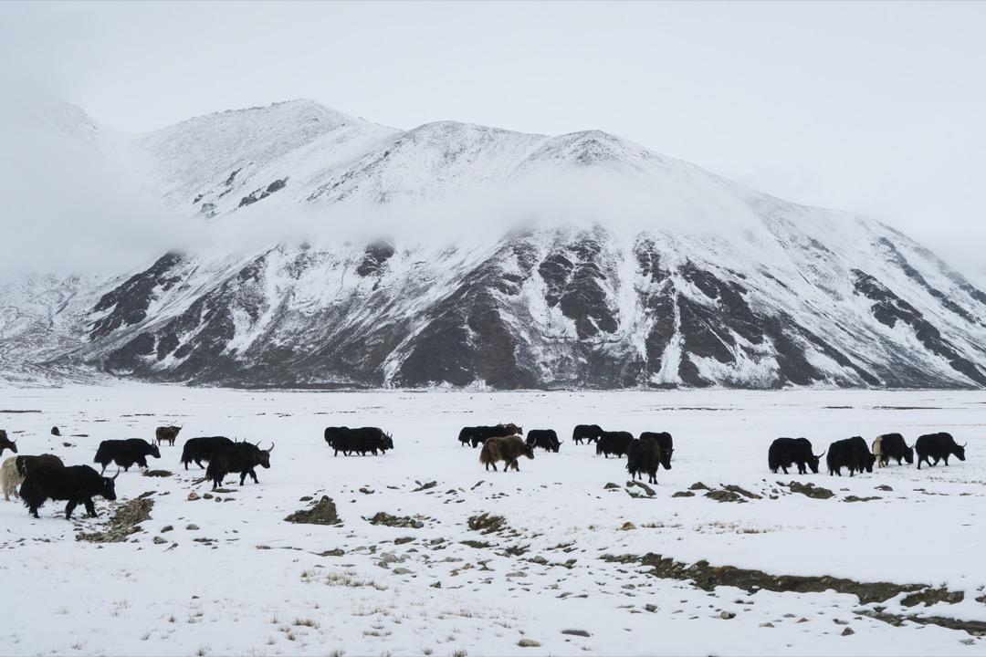 沿著中印邊境道路一路顛簸,在大雪中前行,進入荒涼無人的軍事管制區,汽油耗盡的車子只能靠遊牧邊界的藏民們進行補給。