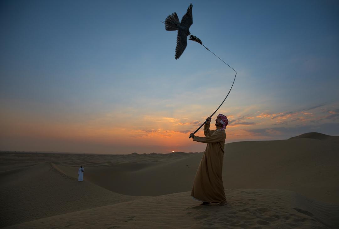 2017年9月20日,杜拜皇室成員 Butti bin Maktoum bin Juma al-Maktoum 猶長在杜拜的一處沙漠訓練獵鷹。該位猶長是阿聯猶第一批訓練圈養繁殖獵鷹的訓練員。