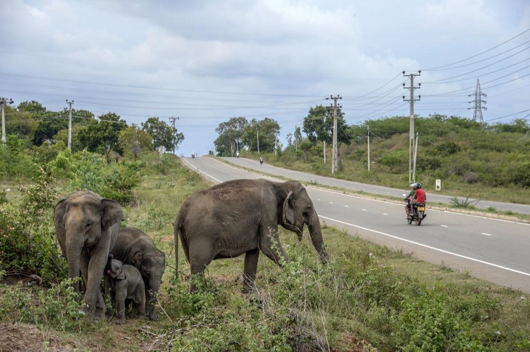 由於大象出沒的問題嚴重,甚至有人設置通電柵欄。想穿越道路的大象,甚至把部分主要道路的水泥圍欄踩壞或損毀。