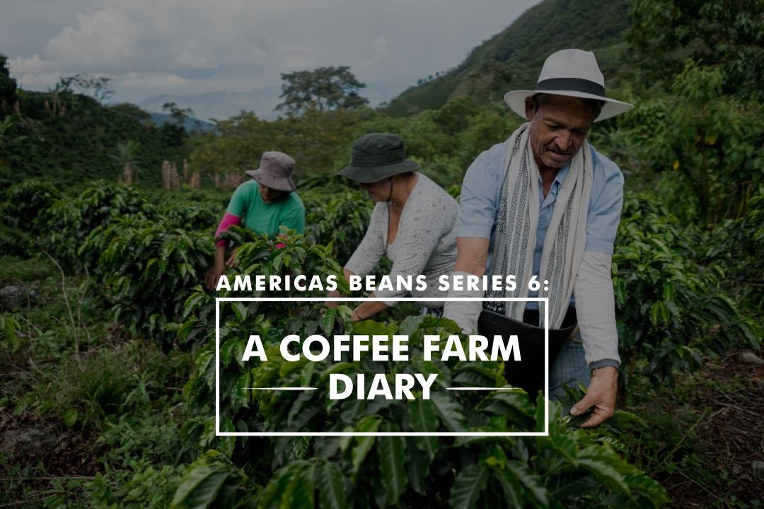 美洲豆系列6 - 咖啡農場日記