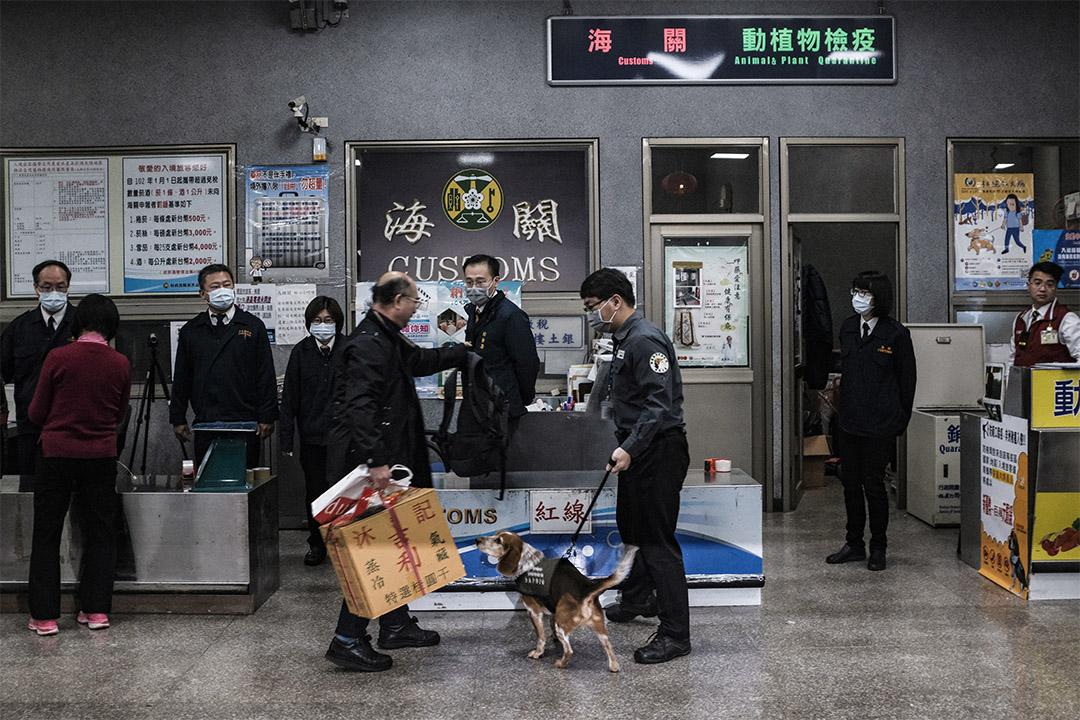 2019年1月4日,金門水頭碼頭一隻檢疫犬在工作。