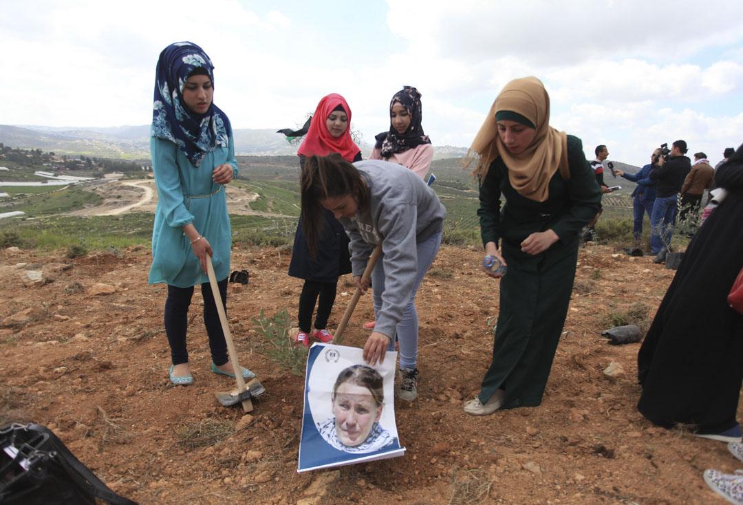 2015年3月15日,一群女士聚種植橄欖樹,紀念2003年3月16日在加沙遭以色列國防軍推土機輾死的若雪·柯利 (Rachel Corrie)。