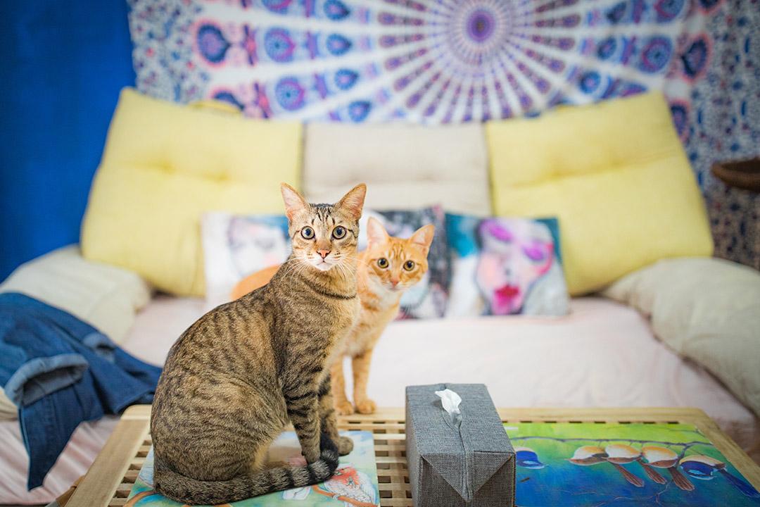 Hannah和Zach的家貓。