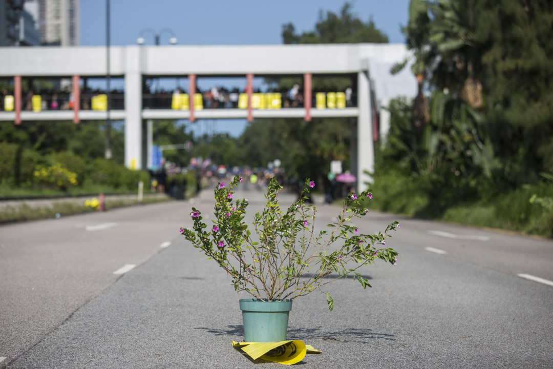 2019年8月5日,大埔示威者放在路上的植物。
