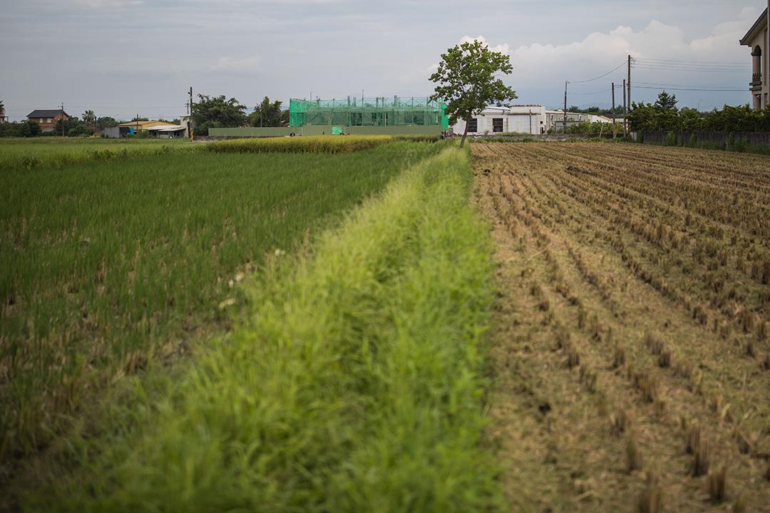 寇延丁的田。