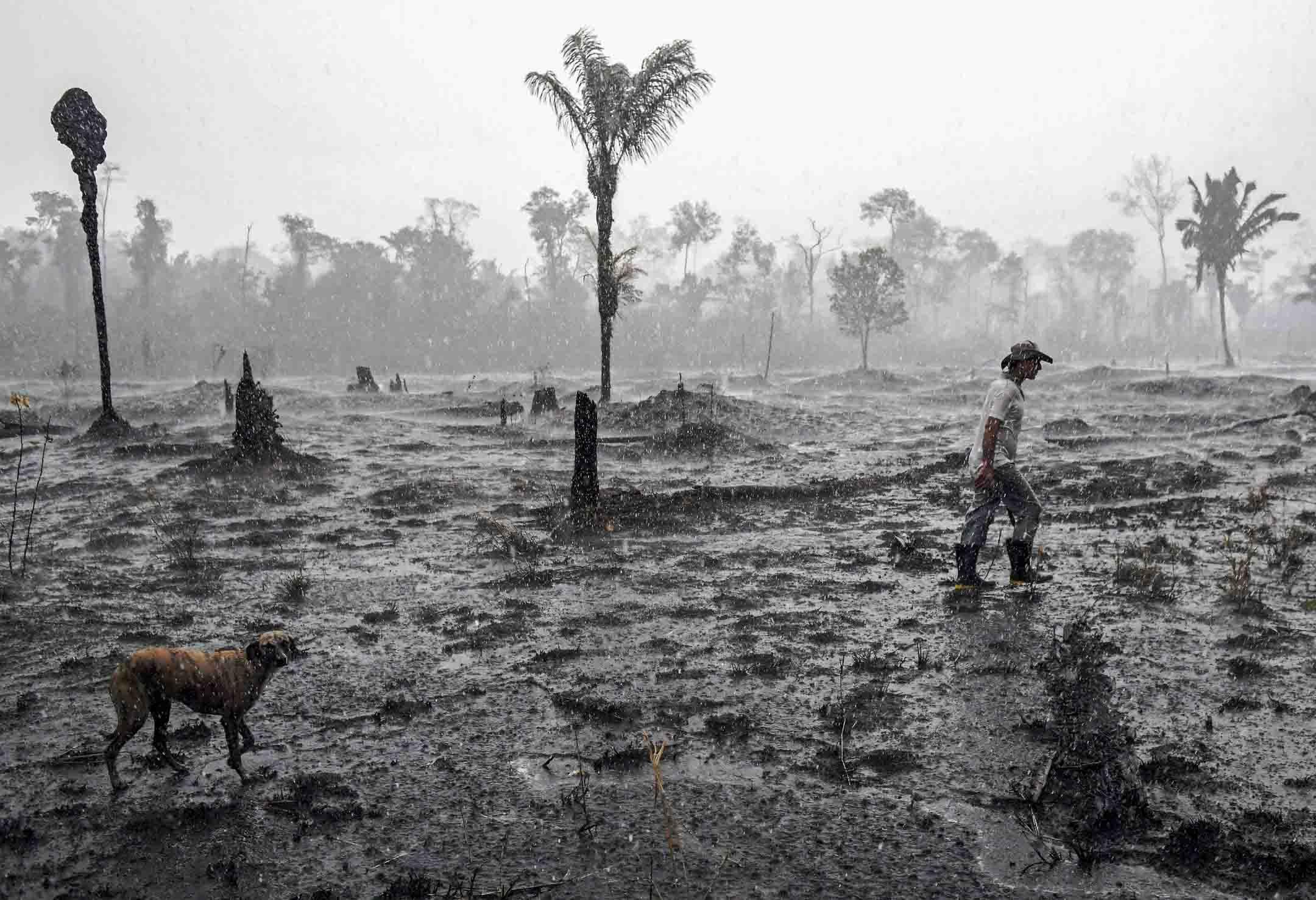 2019年8月26日,一名巴西農民和一隻狗在亞馬遜雨林的一個被燒毀的地區散步。 攝:Carl De Souza/AFP/Getty Images