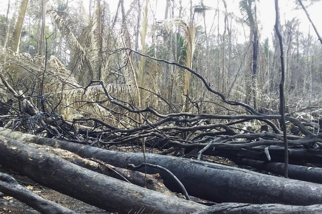 Uru-Eu-Wau-Wau原住民的土地附近有燒焦的樹木。