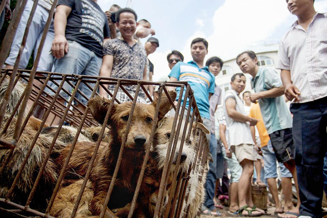 2015年6月21日,商人等待顧客在廣西玉林市場購買籠子裡買狗。 攝:STR/AFP via Getty Images