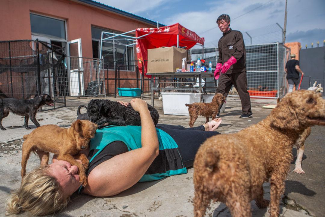 2019年7月24日,中國哈爾濱的狗隻庇護所。