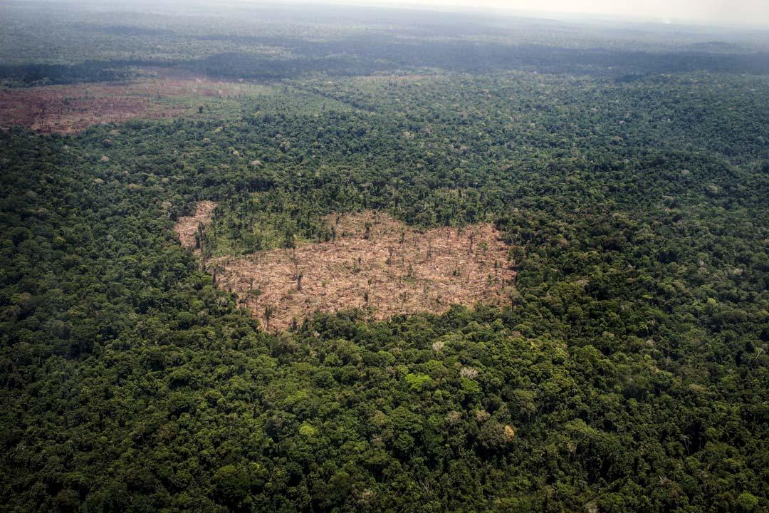 2014年10月14日,亞馬遜森林一個被大量砍伐的林區。