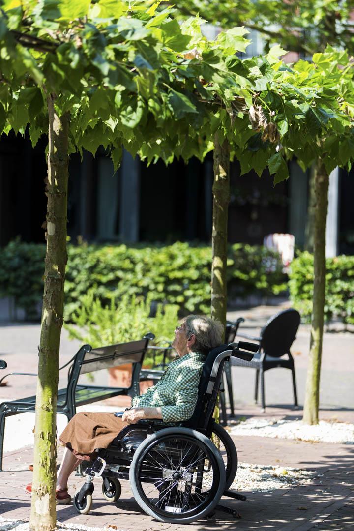 一名老人在樹下休息。
