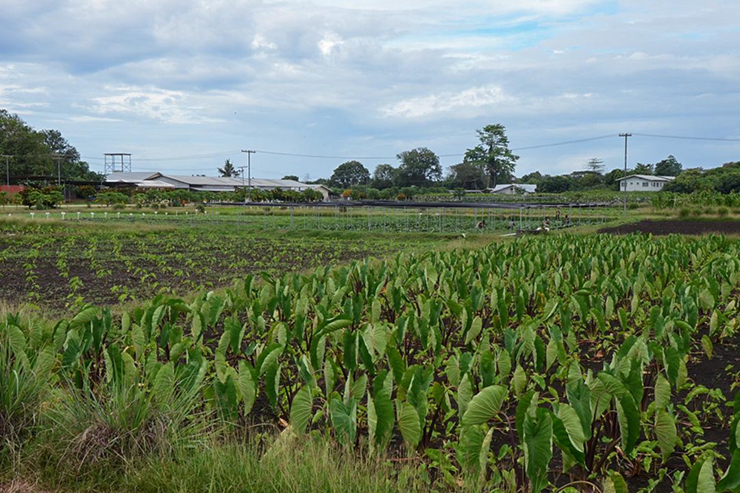 台灣農技團一隅。