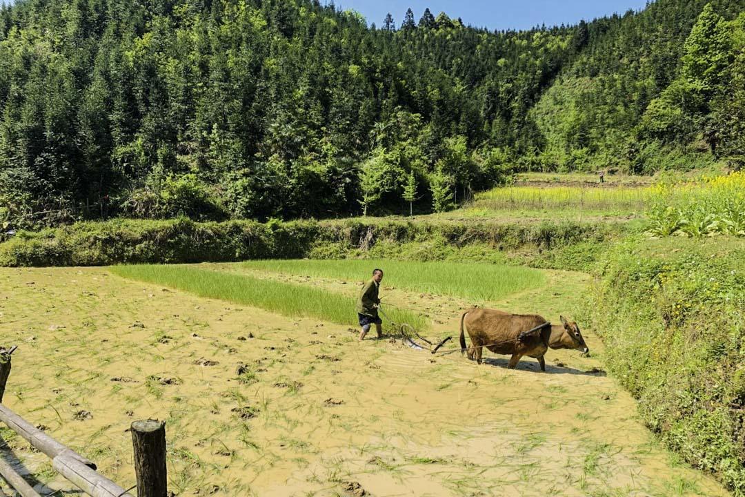 今年6月,大宅村村民下地種田。