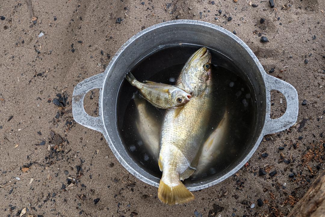 近年馬達加斯加近海水產越來越稀少。