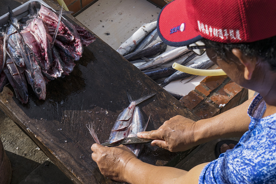 謝永泉在處理捕到的飛魚。