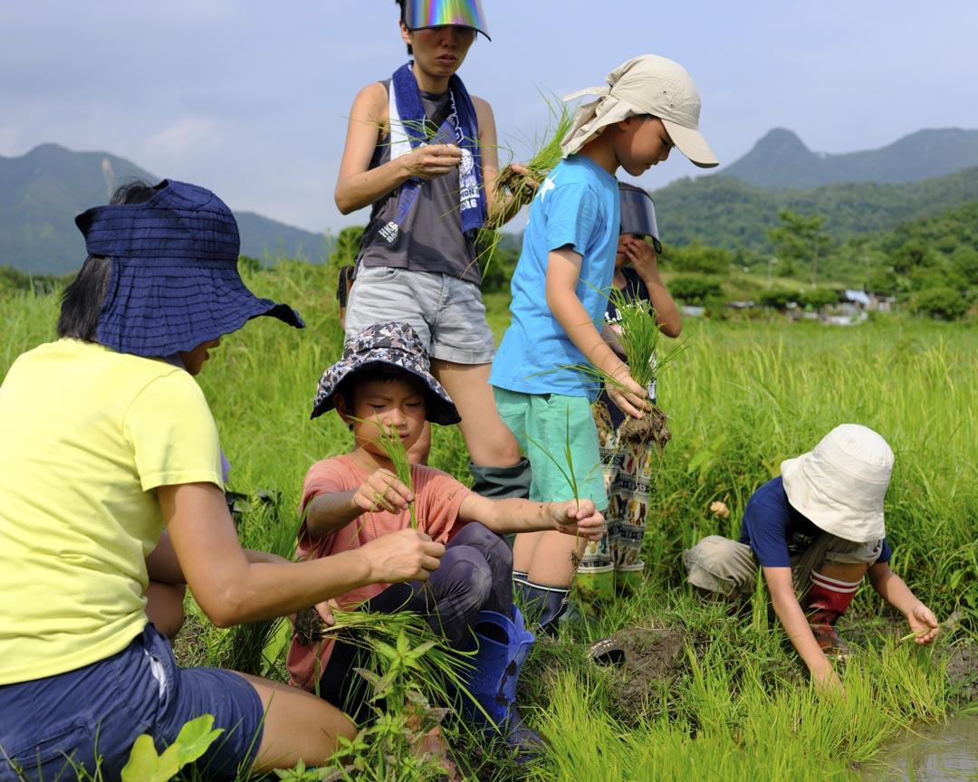 Kids Club稻米工作坊內容包括種米體驗,亦有田間生態觀察、詩歌、濕水彩的學習等等。