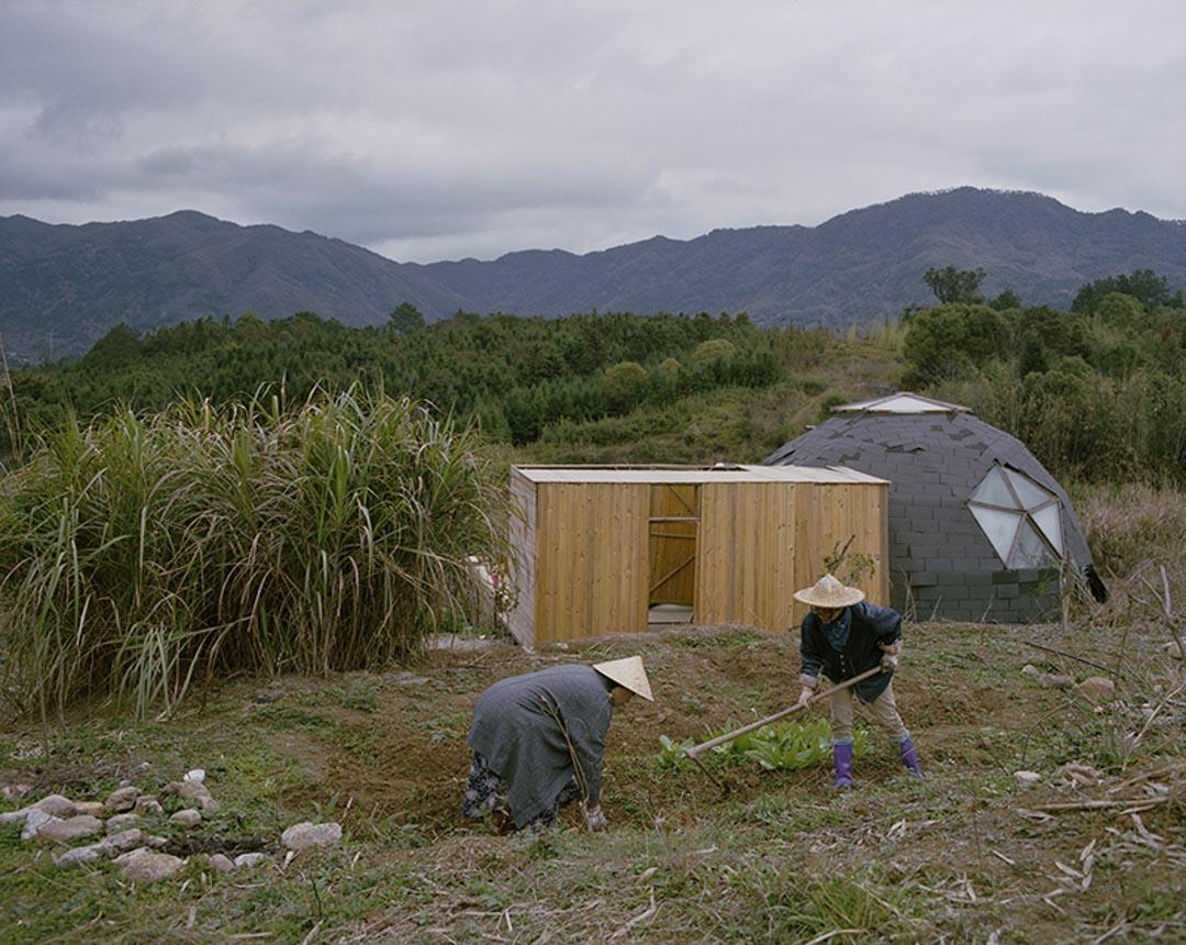 3月,福州剛剛下過一場大雨,邢振和一名從青島來的朋友在種秋葵。