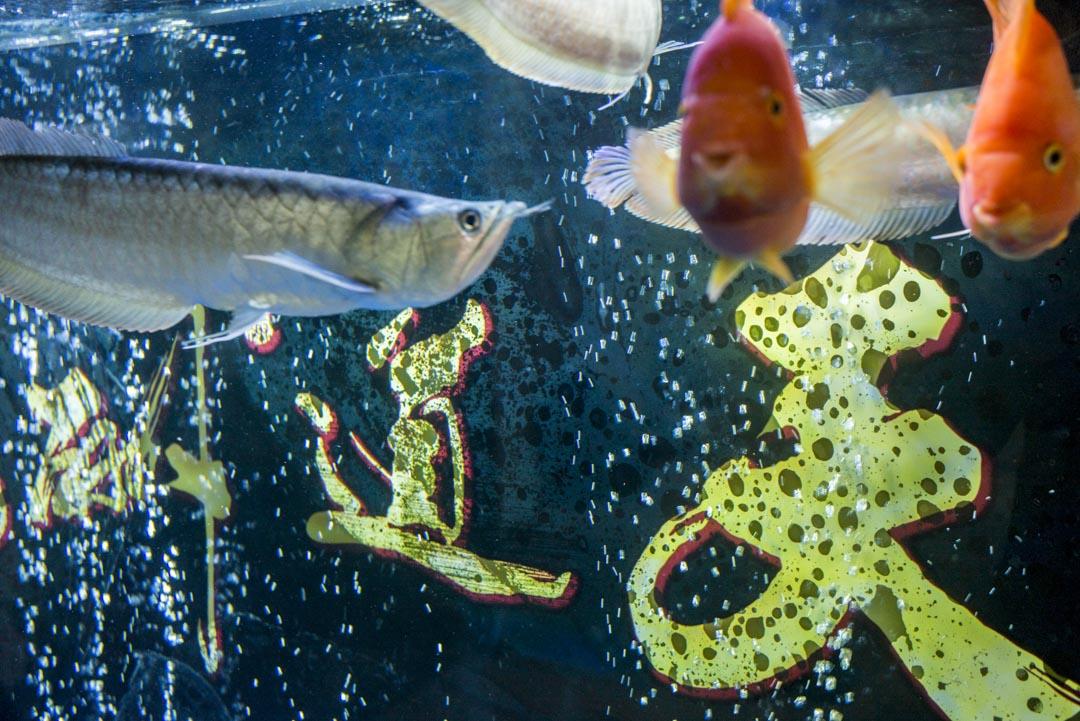 李總的婚介公司內,進門可見一台大魚缸,養着鯊魚和龍魚,魚缸裏四個大字和李總的微信名稱一樣——「天道酬勤」。