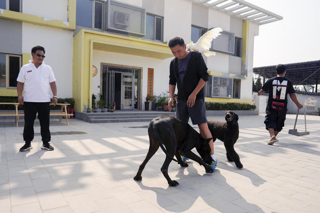 何軍與他的寵物狗玩耍。