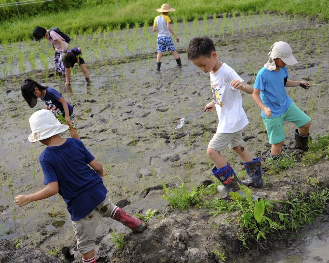 參加Kids Club稻米工作坊的小朋友體驗田野間的工作。