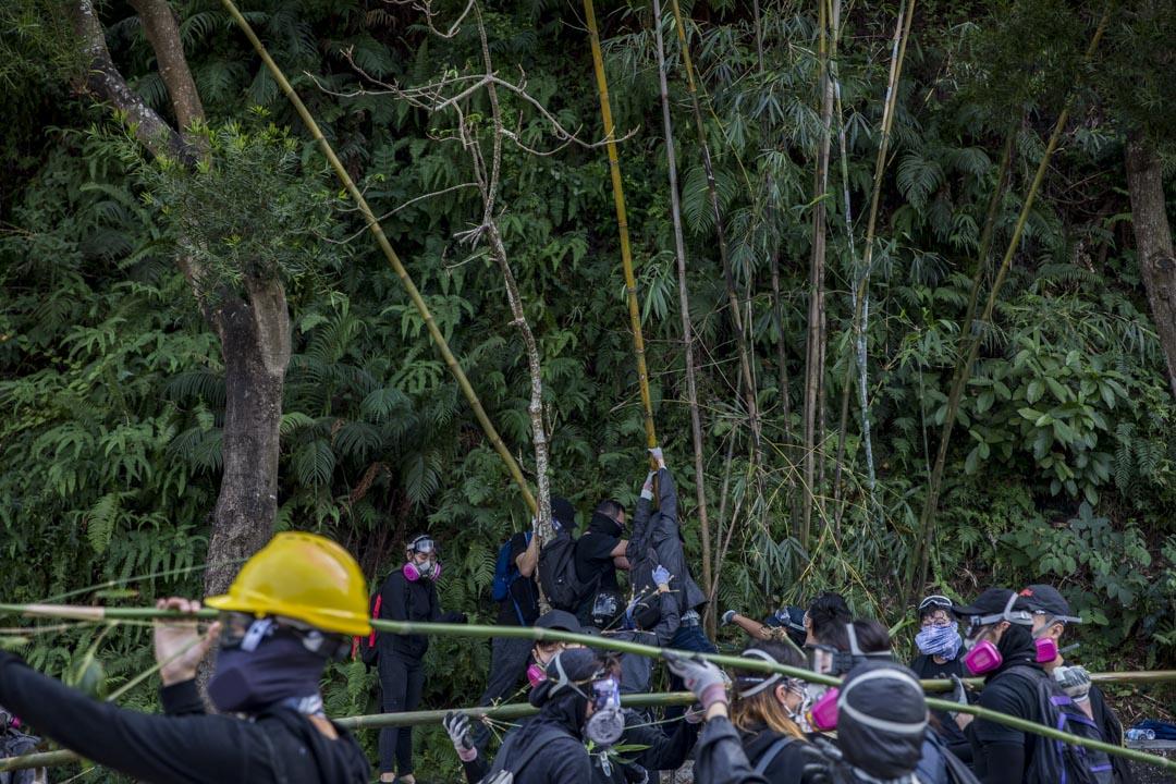 2019年11月12日,香港中文大學,示威者以樹枝架設路障,堵塞校內馬路。 攝:林振東 / 端傳媒