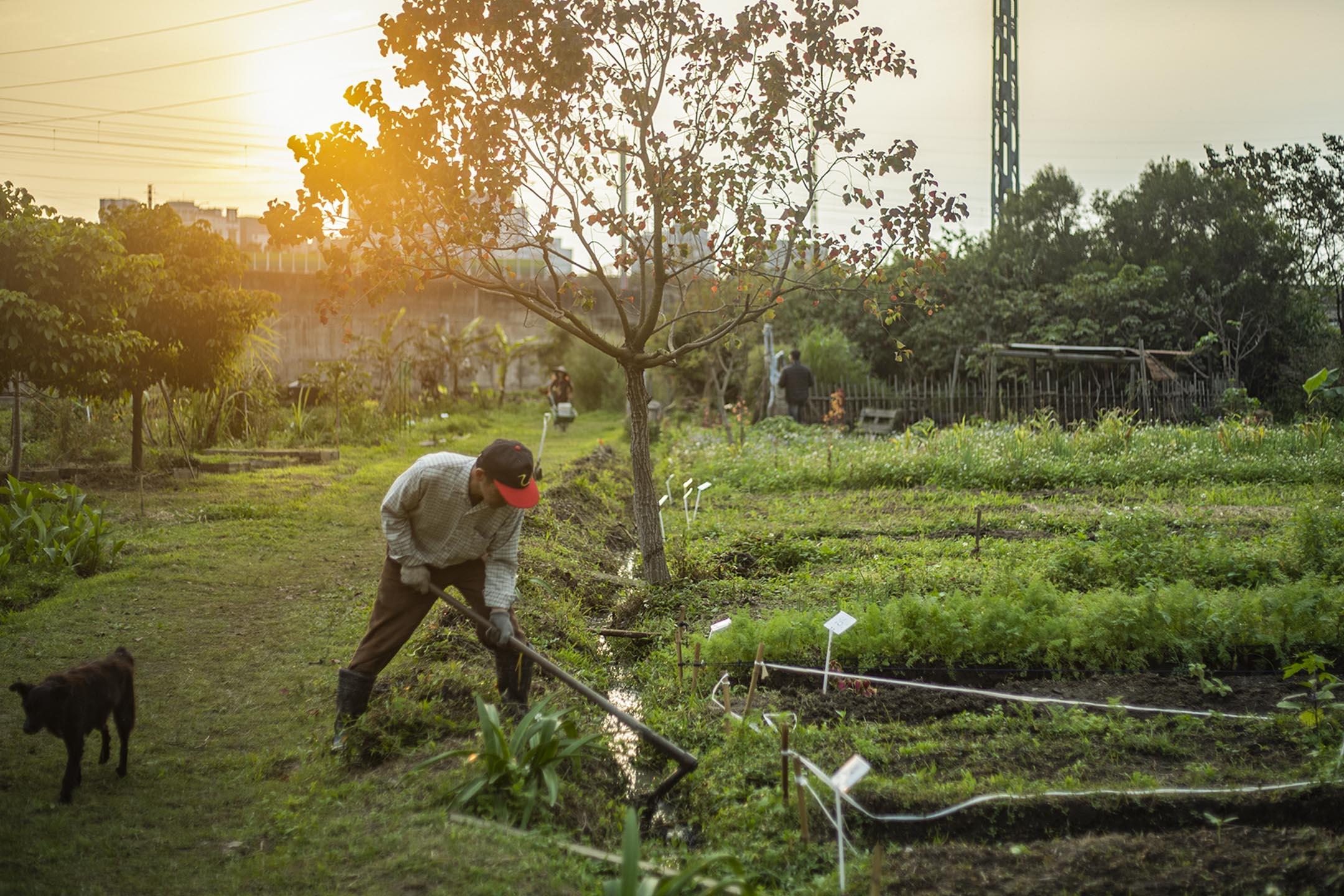 農人在新竹的田地上務農。 攝:陳焯煇/端傳媒