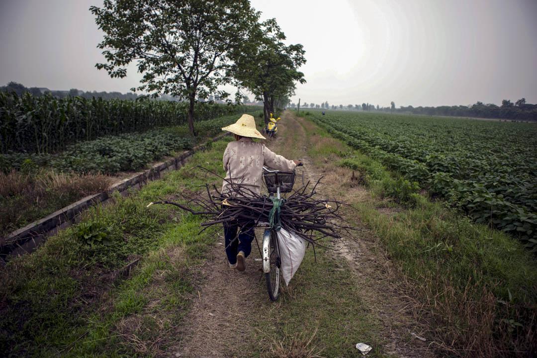 2012年6月12日,杭州一個農民正運送柴木。