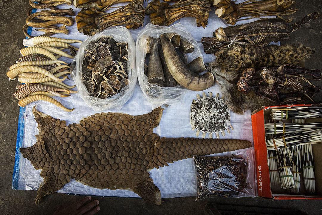 穿山甲的甲片在緬甸勐拉的攤檔。