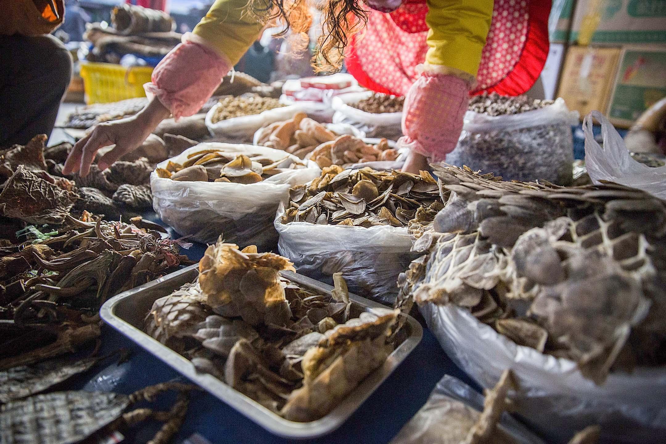 緬甸勐拉,出售穿山甲等野生動物製品的商販。