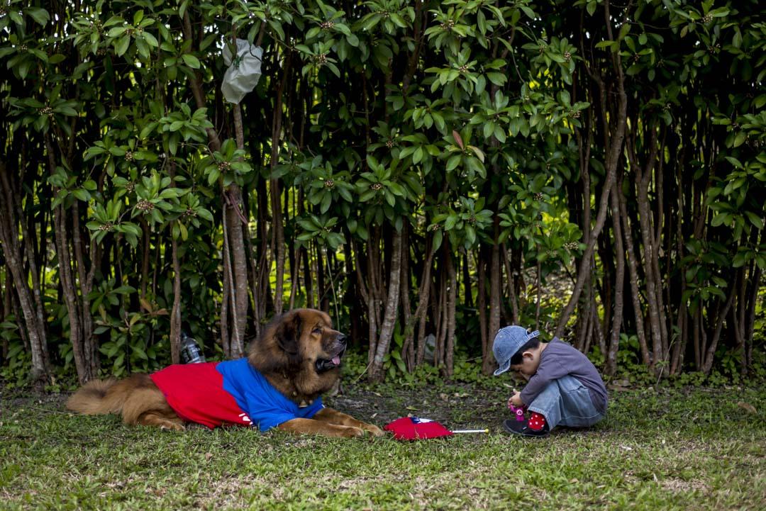2020年1月7日,宜蘭的韓國瑜造勢大會現場,一隻休息中的狗。