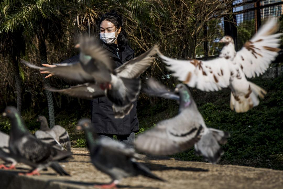 2020年1月28日,市民在馬鞍山的海邊看白鴿。 攝:陳焯煇/端傳媒