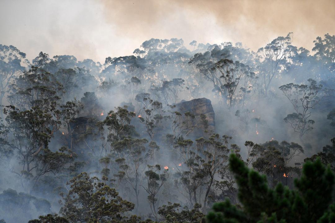 2019年12月9日,位於雪梨北方的中海岸,一片樹林正在焚燒。