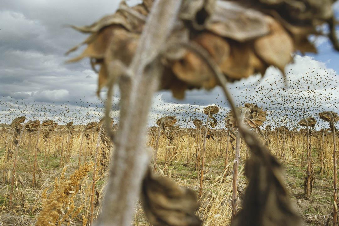 美國南達科他州©Rebecca Norris Webb