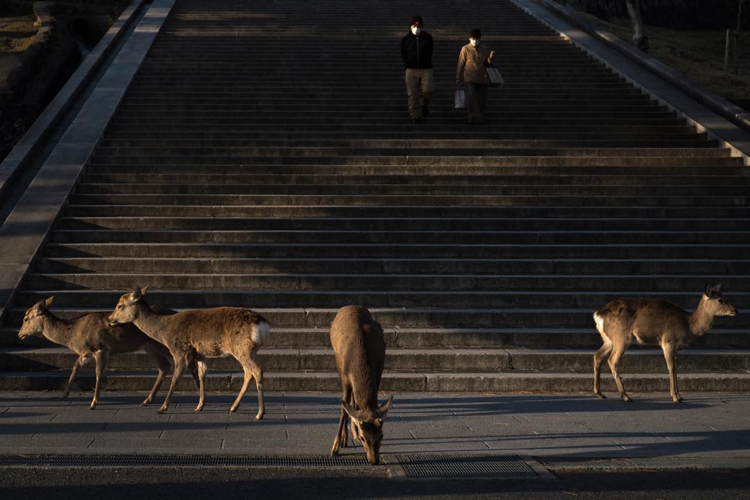 2020年3月12日,日本奈良因受疫情影響而遊客銳減。